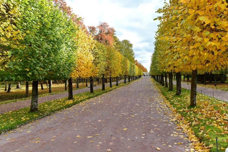 El camino con el follaje de otoño y los árboles amarillos fotos de archivo libres de regalías