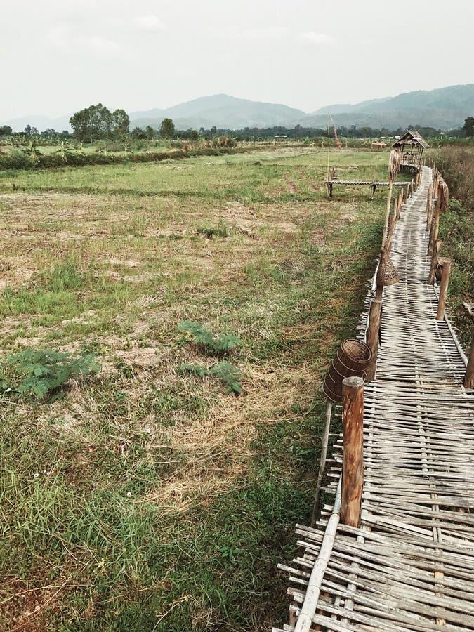 El camino de bambú entre el campo verde imagenes de archivo