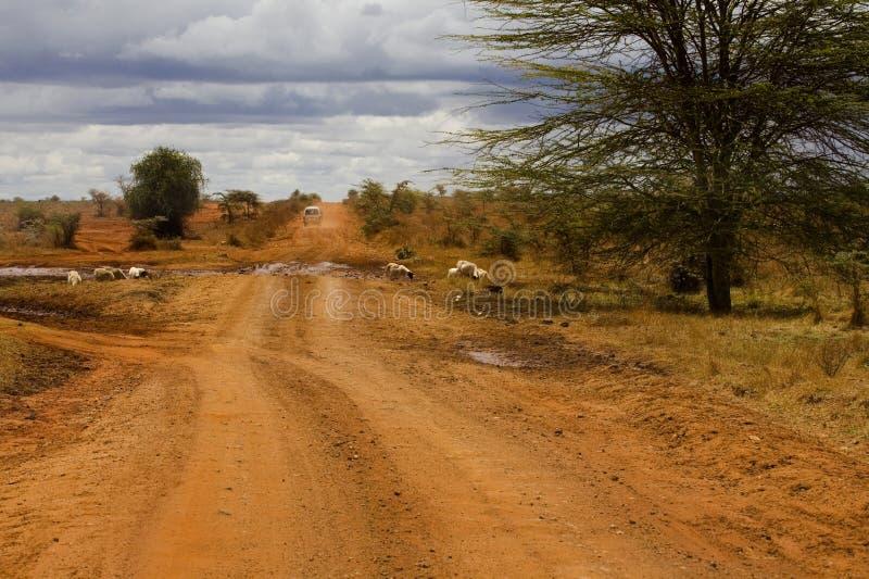 El camino de Kilimanjaro fotos de archivo