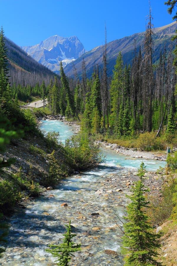 El camino de Windemere y el río de Tolumn enrollan manera a través de Rocky Mountains cerca del barranco de mármol, parque nacion fotografía de archivo libre de regalías