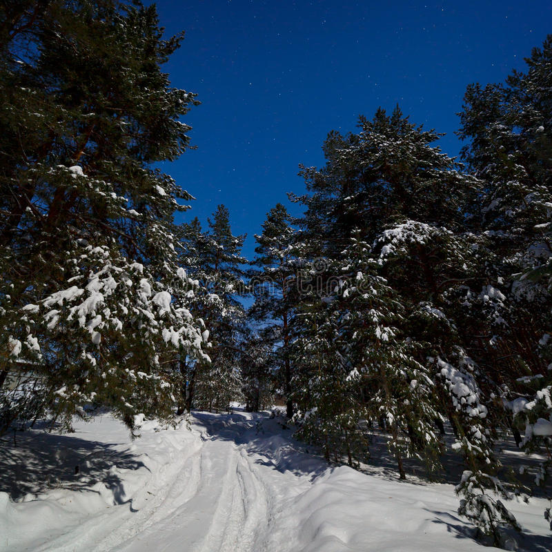 El camino en nieve profunda en el bosque del pino fotografió en un wint fotos de archivo