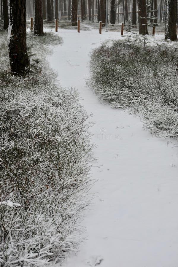 El camino en un bosque del pino del invierno foto de archivo
