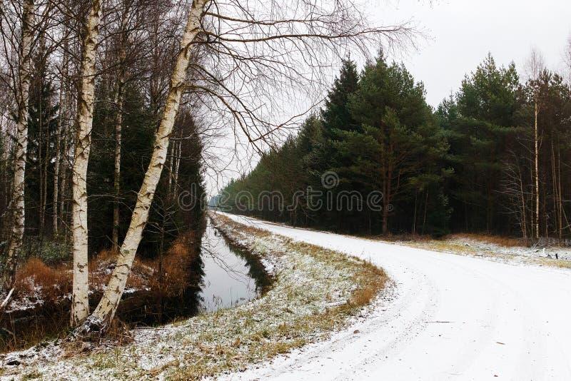El camino forestal fotos de archivo