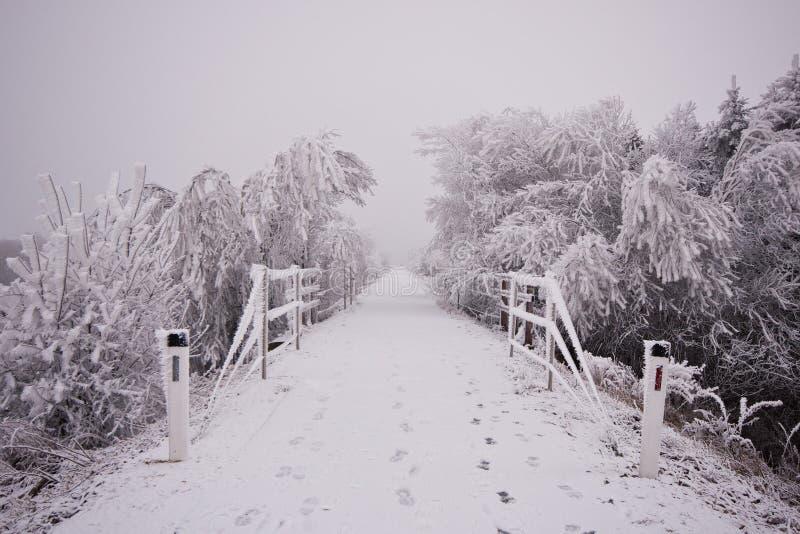 El camino forestal debajo de la nieve en el invierno fotografía de archivo