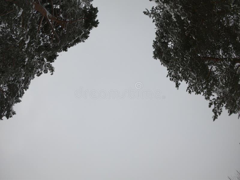 El camino forestal del invierno en el bosque en invierno foto de archivo