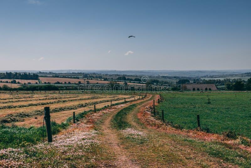El camino irlandés del campo separa un campo que se ha cultivado de otro con la hierba fotografía de archivo