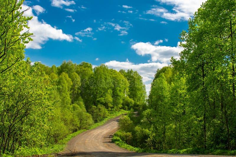 El camino que lleva al bosque verde foto de archivo