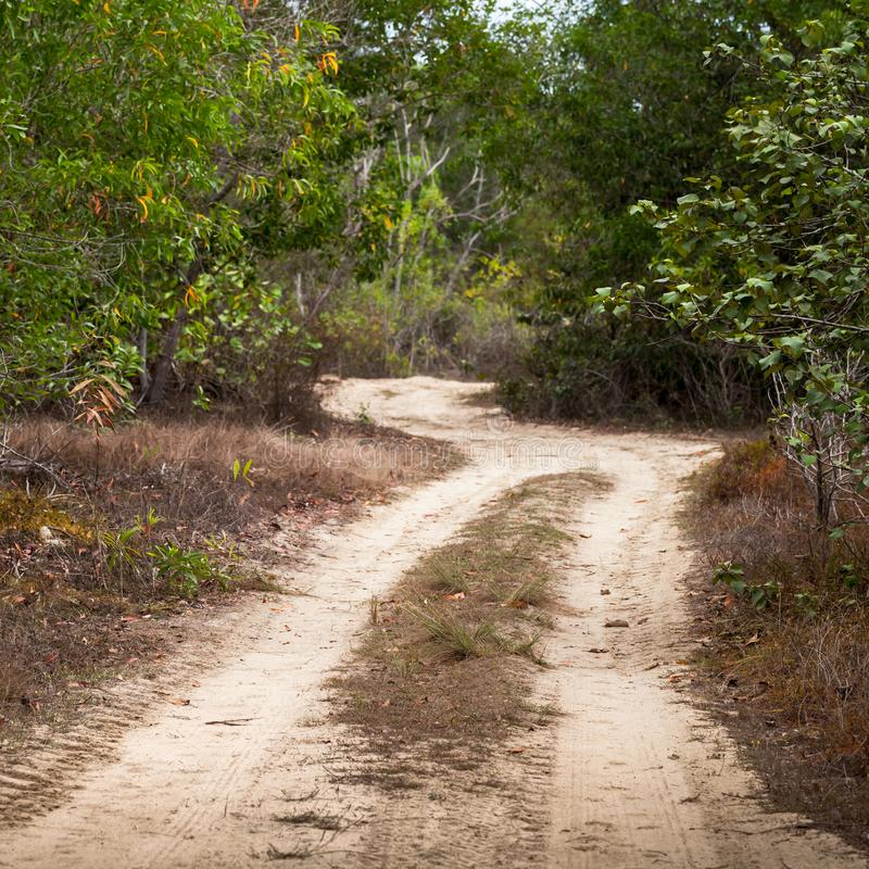 El camino rural polvoriento vacío pasa a través de bosque foto de archivo libre de regalías