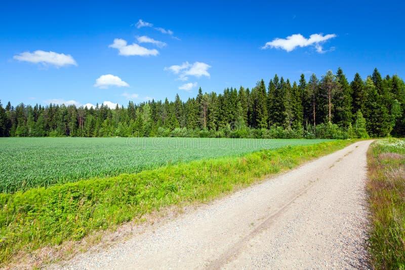 El camino rural vacío del estrecho va cerca de campo verde fotografía de archivo