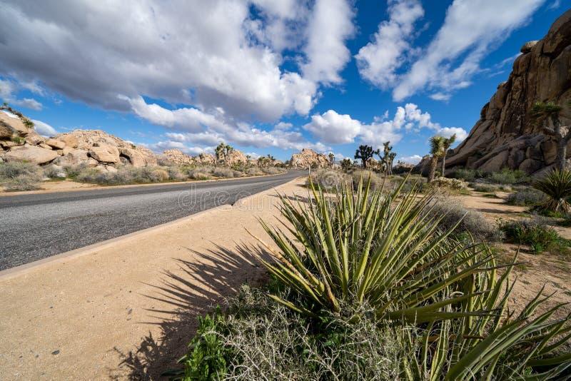 El camino a través de Joshua Tree National Park, en una tarde en parte nublada de la primavera Planta del agavo en primero plano imagen de archivo libre de regalías