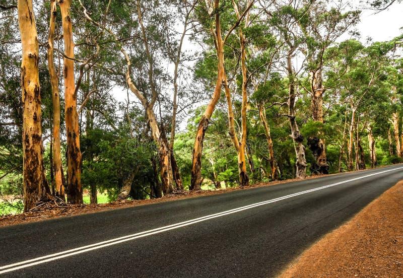 El camino a través del bosque fotografía de archivo