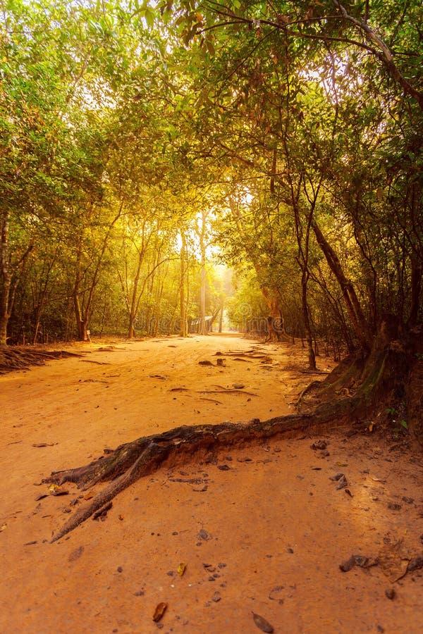 El camino a través del bosque en la selva con luz del sol hermosa imagenes de archivo
