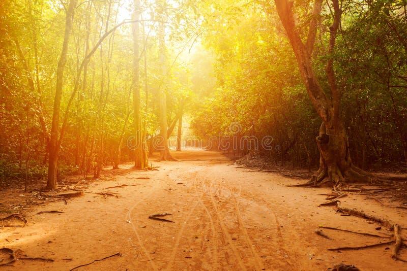 El camino a través del bosque en la selva con luz del sol hermosa imagen de archivo libre de regalías