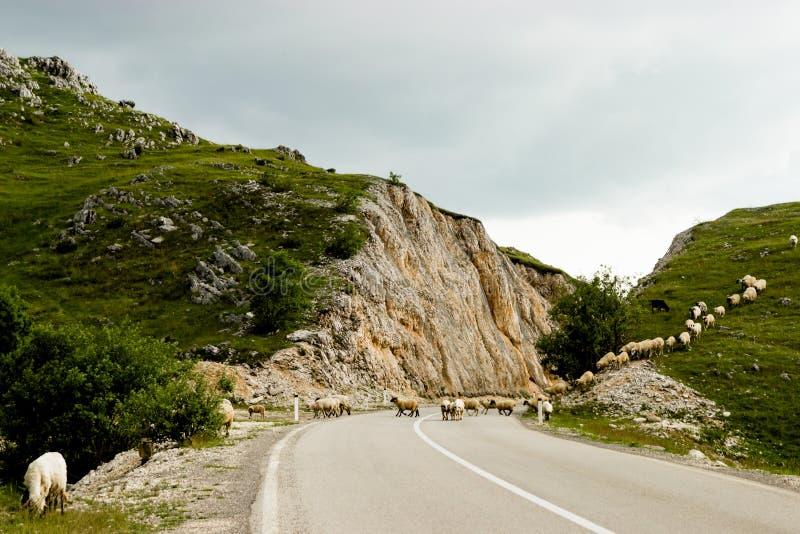 El camino vacío en Montenegro foto de archivo libre de regalías