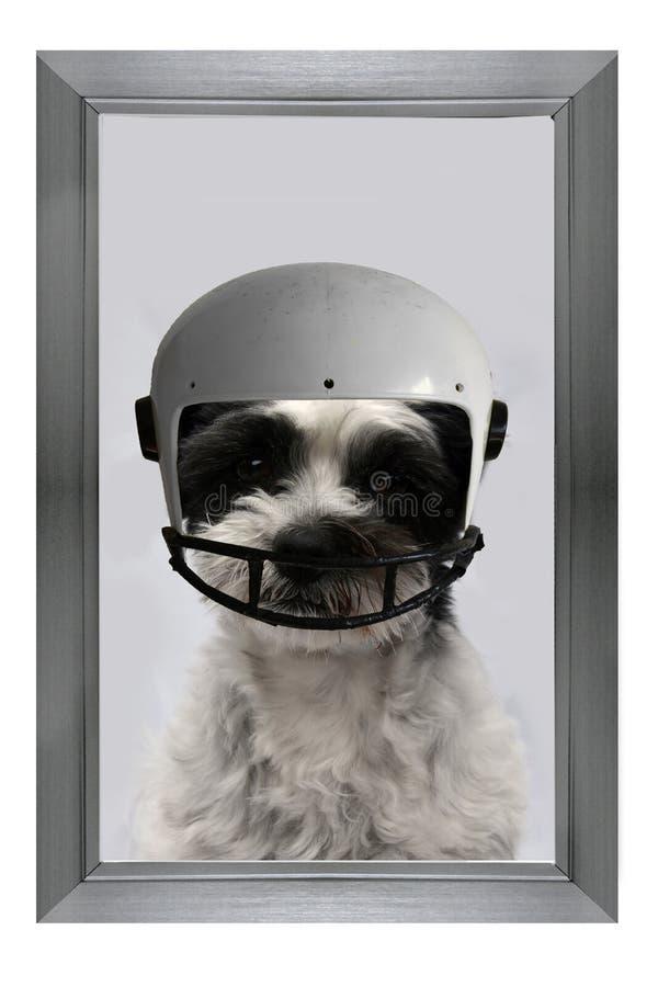 El campeón, marco con el fútbol americano que juega el perro imagenes de archivo