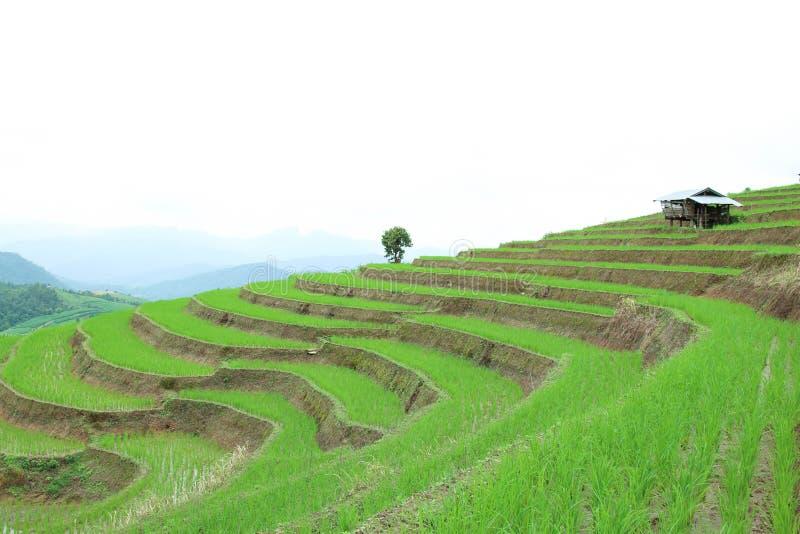 El campo colgante verde del arroz en el PA bong el pueblo del piang, Chiangmai, Tailandia imágenes de archivo libres de regalías