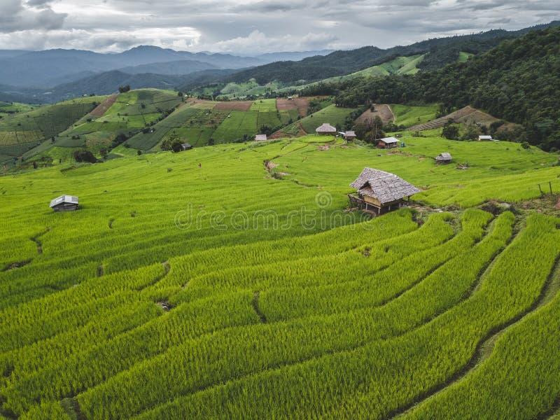 El campo de Chiang Mai Northern Thailand fotos de archivo