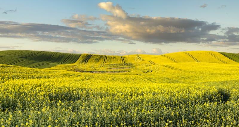 El campo de mayo en el sol fotos de archivo
