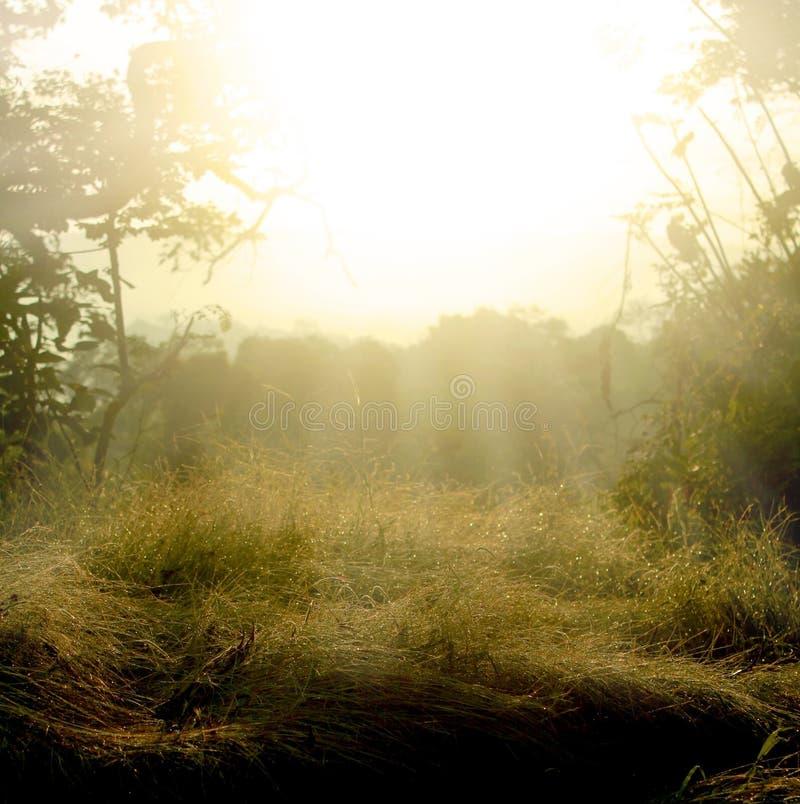 El campo después de la lluvia imagen de archivo libre de regalías