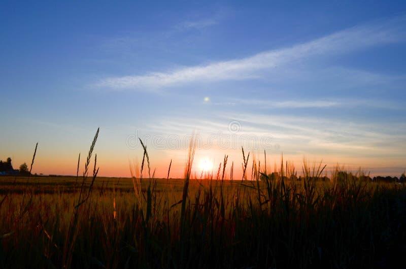 El campo en el amanecer imagen de archivo libre de regalías