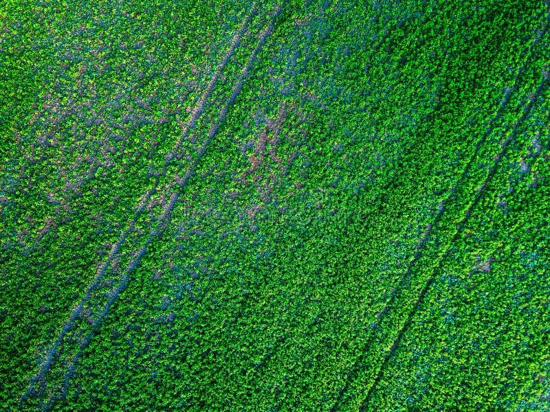El campo verde del país con fila alinea, foto aérea imagen de archivo