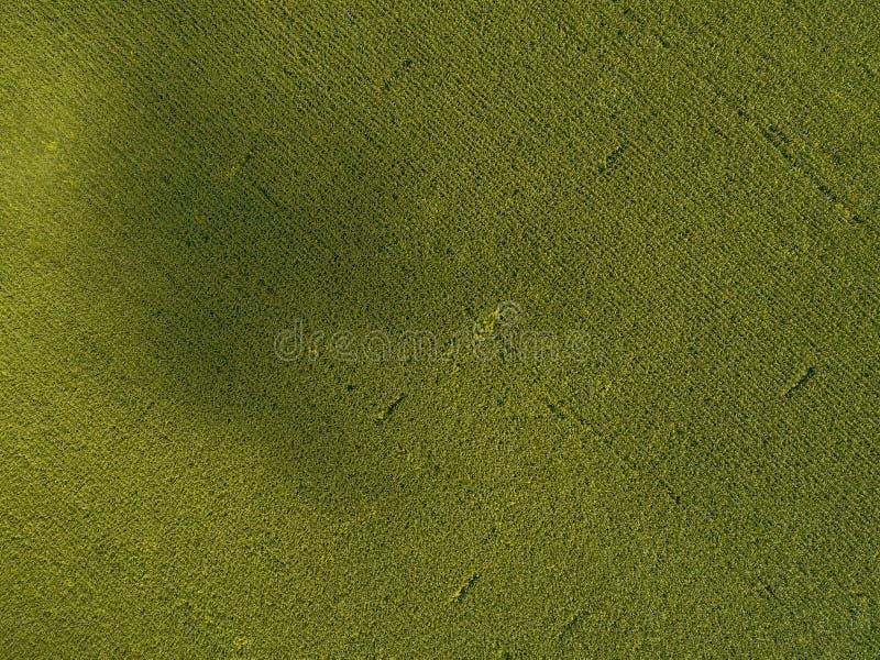 El campo verde del país con fila alinea, visión superior, foto aérea fotos de archivo libres de regalías