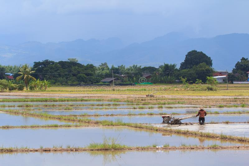 El campo y el granjero del arroz está arando imágenes de archivo libres de regalías