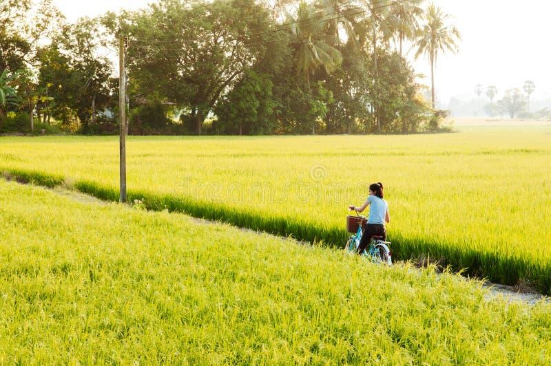 El campo y la bicicleta verdes tropicales del arroz del camino de tierra rural viajan en Ko fotos de archivo libres de regalías