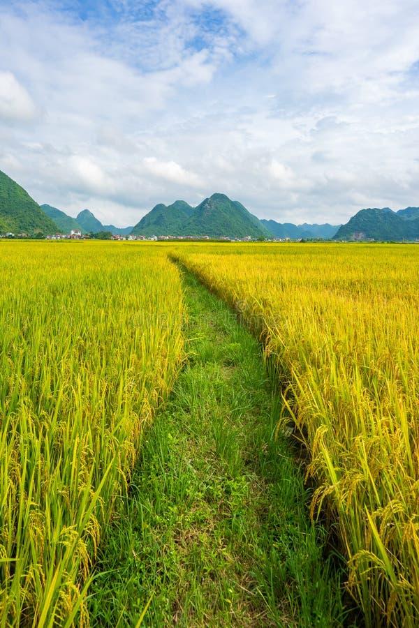 El campo y las montañas del arroz en BacSon - Vietnam foto de archivo