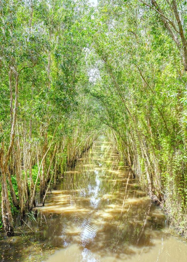 El canal alineado con el bosque del mangle imágenes de archivo libres de regalías