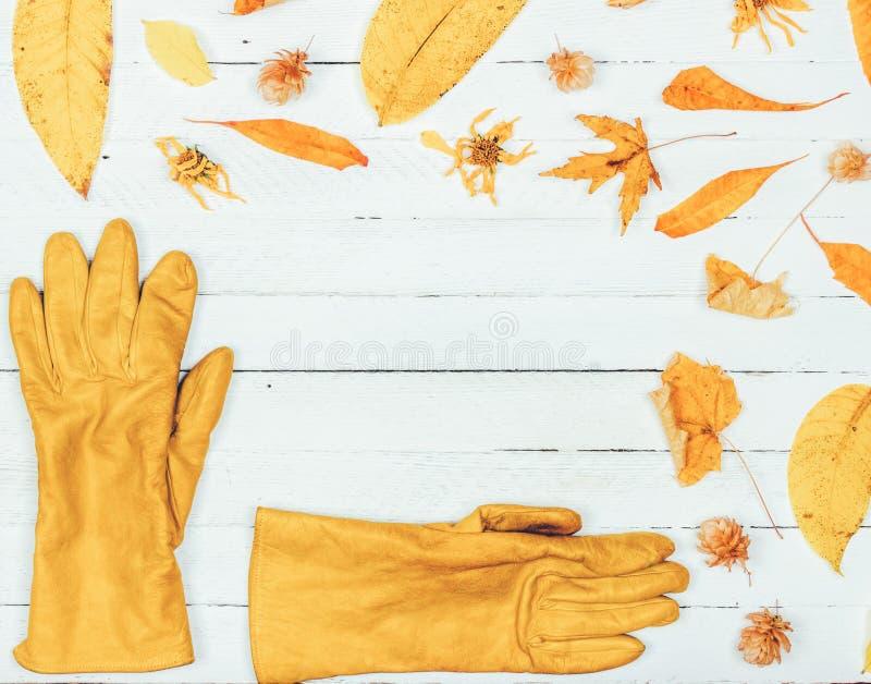 El capítulo hecho de otoño secó las hojas amarillas y los guantes para mujer en el fondo de madera blanco Endecha plana, visión s fotos de archivo