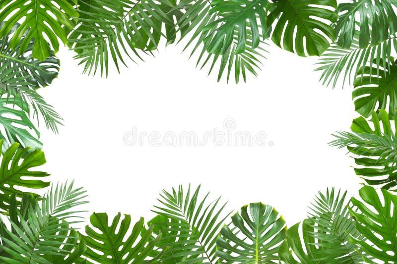 El capítulo hizo de hojas tropicales verdes frescas en el fondo blanco fotos de archivo libres de regalías