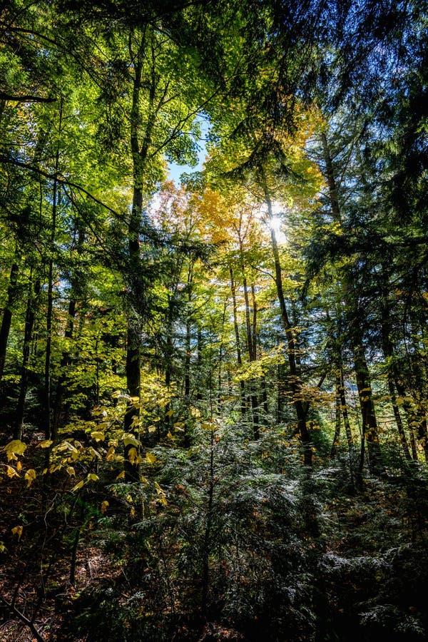 El capítulo llenó el bosque en otoño fotografía de archivo libre de regalías