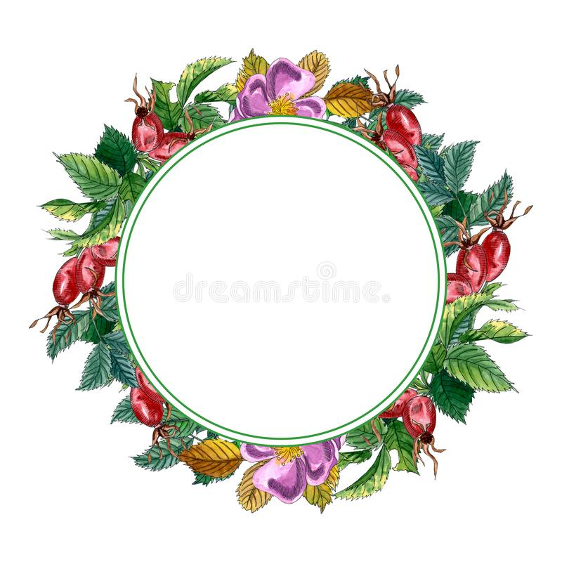 El capítulo redondo floral con la rosa salvaje rosada, subió cadera, perro subió, las hojas verdes y las bayas rojas, guirnalda e stock de ilustración