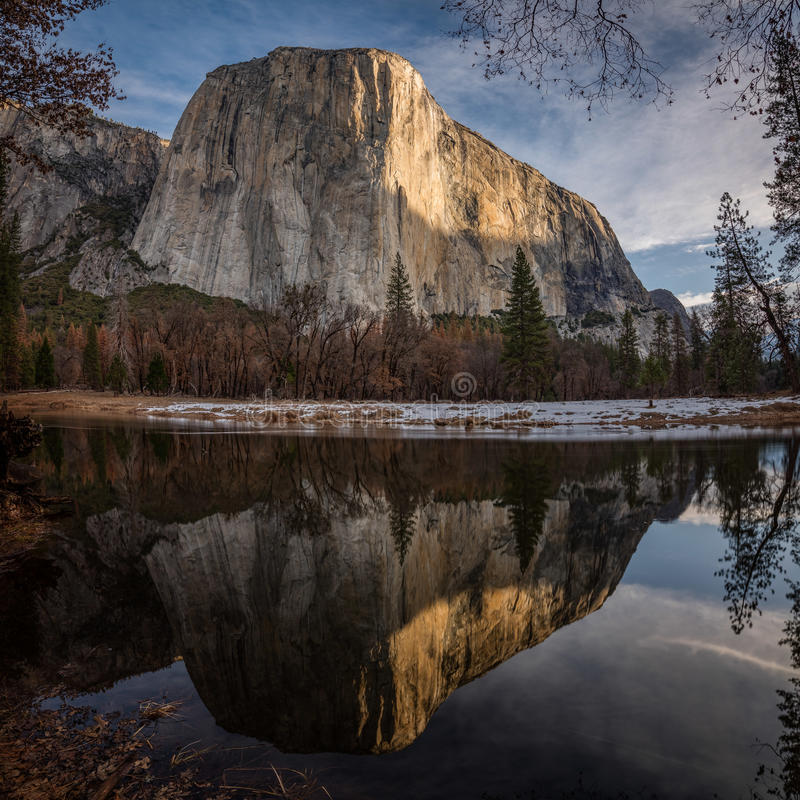 El Capitan Reflected in the Merced River. El Capitan in Yosemite National Park is reflected in the calm waters of the Merced River during a winter sunrise stock image