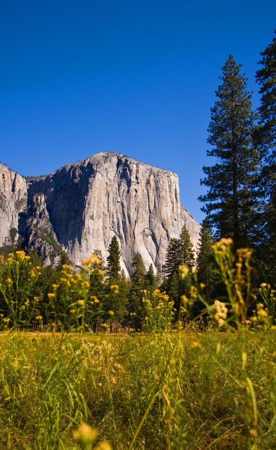 EL Capitan, stationnement national de Yosemite photos libres de droits