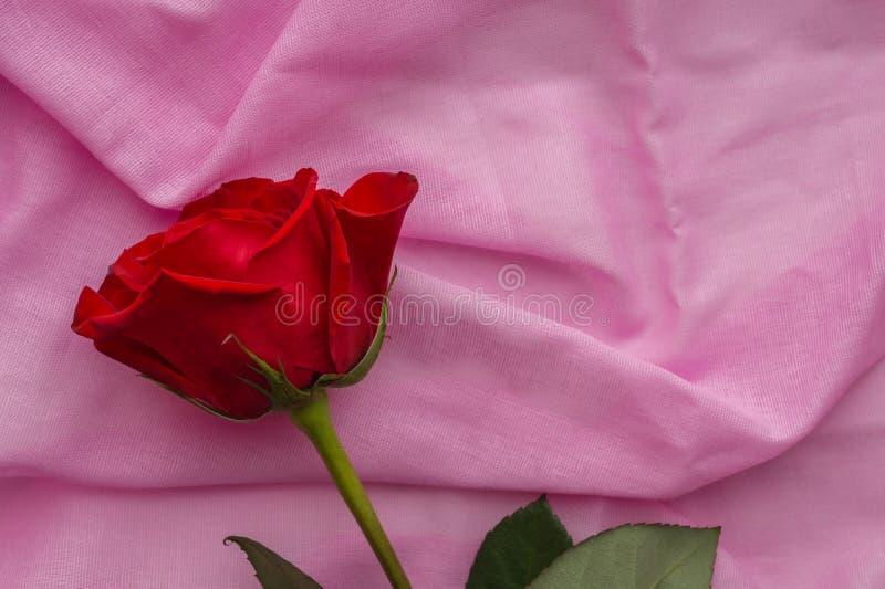 El capullo de rosa rojo miente en un fondo rosado en colores pastel de la tela de algodón Día de San Valentín, día de madres, con foto de archivo libre de regalías