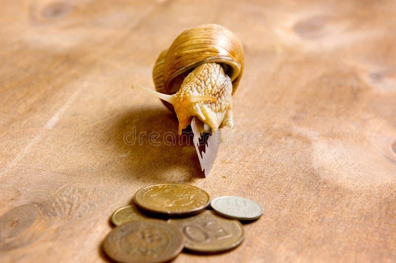 El caracol de jardín se arrastra de una cuchilla a las monedas foto de archivo