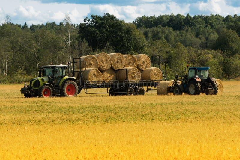 El cargador agrícola carga pilas de heno para transportar en la granja imagenes de archivo