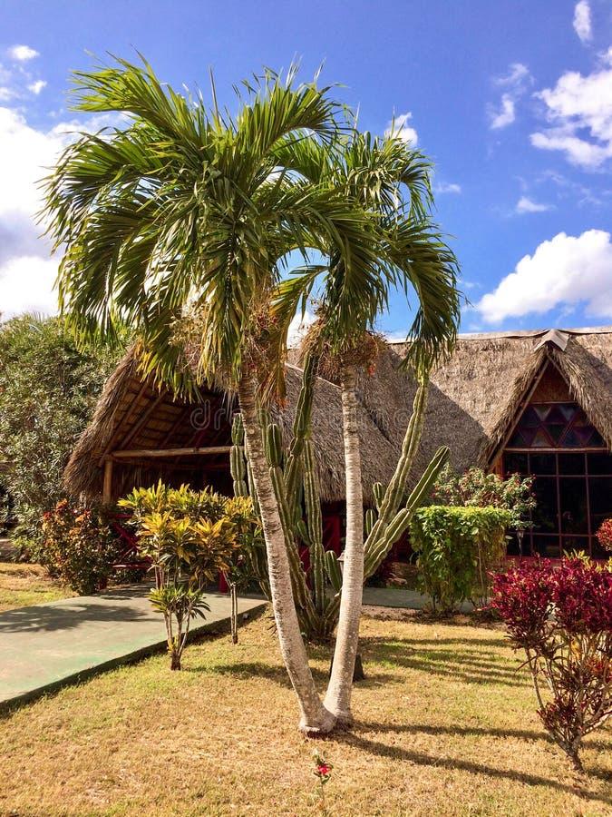 El Caribe, palmeras y edificio con un tejado hecho de leav de la palma imagen de archivo