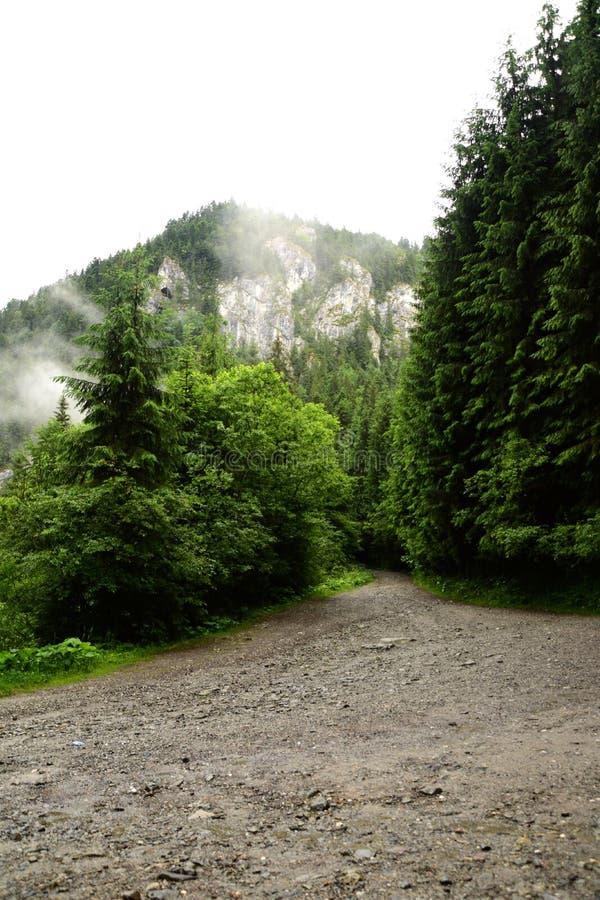 El carril del bosque que va en la montaña fotos de archivo libres de regalías