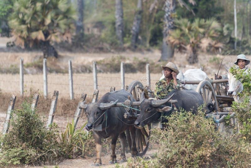 El carro del buey en el camino, costura cosecha, Camboya imagenes de archivo