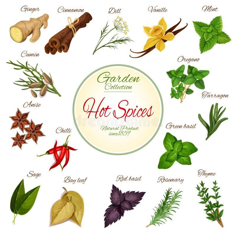 El cartel de la especia caliente, de la hierba y del condimento diseña ilustración del vector