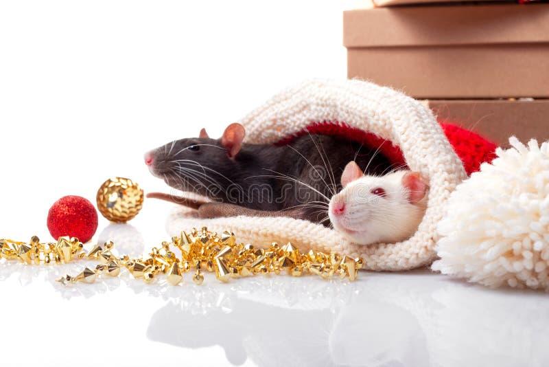 El cartel del Año Nuevo por el año feliz chino de la rata 2020 Ratas blancos y negros como símbolo del yin y del concepto de yang imágenes de archivo libres de regalías