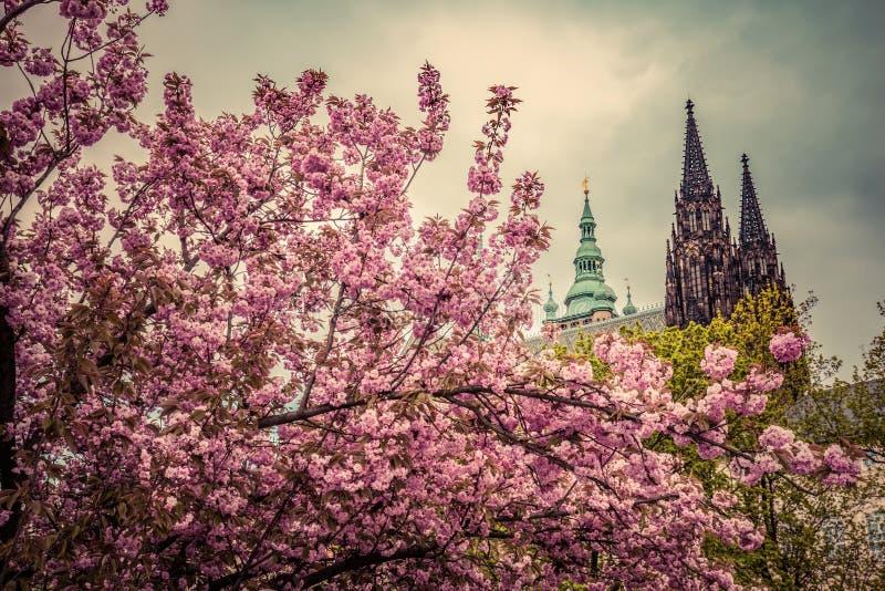 El castillo de Praga con St Vitus Cathedral, Hradcany, República Checa según lo visto a partir de la primavera cultiva un huerto imagen de archivo