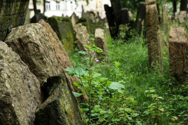 El cementerio judío muy viejo imagen de archivo libre de regalías