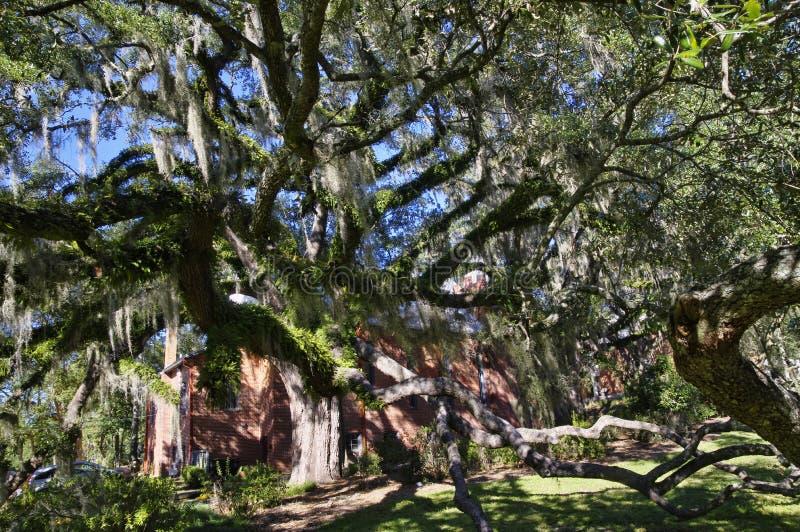 El cementerio viejo de la ciudad de Tallahassee es el más viejo cementerio de la ciudad, Tallagasse imagen de archivo
