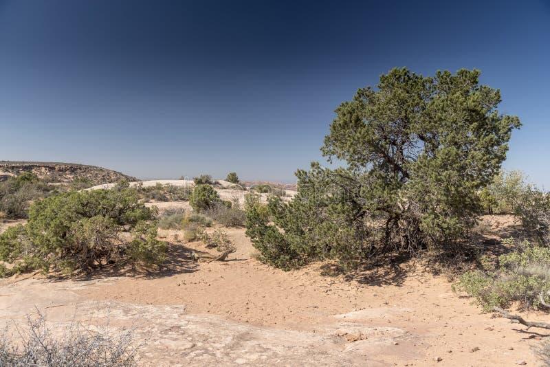 El cepillo del desierto, arquea el parque nacional Moab Utah imagen de archivo