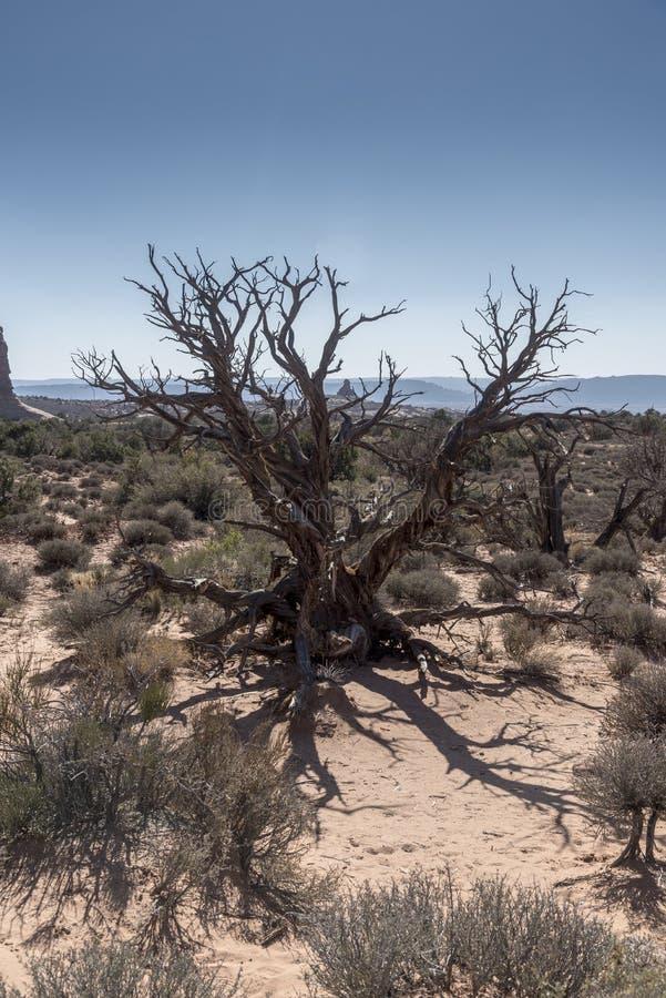 El cepillo del desierto, arquea el parque nacional Moab Utah fotos de archivo