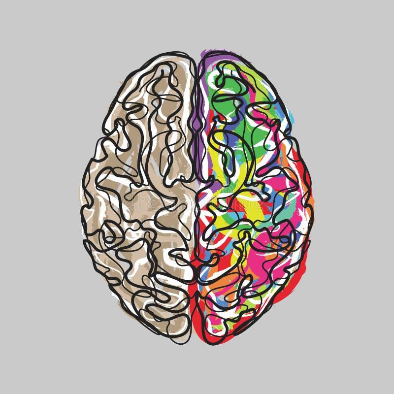 El cerebro creativo con color frota ligeramente vector stock de ilustración